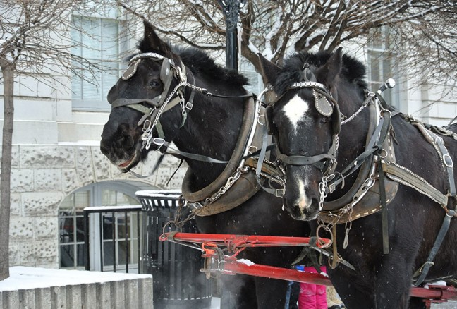 Beat the lines and get on a wagon ride! CREDIT: Laura Meggs - Downtown Kingston!