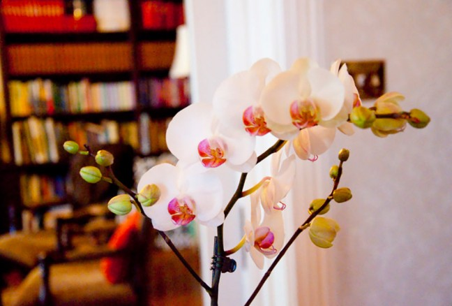 The orchid greeting you at the front hall at the Secret Garden Inn.