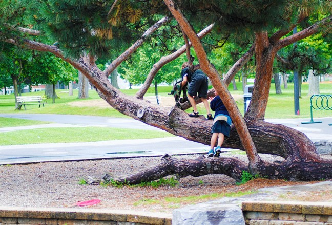 Climbing the coolest tree.