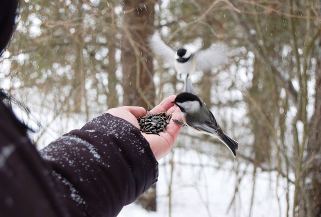 A break in an afternoon of skiing to feed the chickadees. (photo courtesy of CRCA)