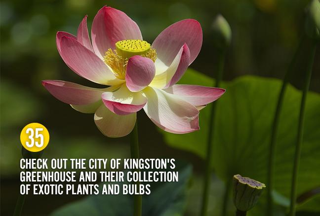 35_exoticplants
