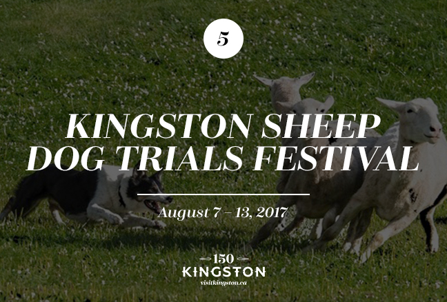 Kingston Sheep Dog Trials Festival - August 7-13